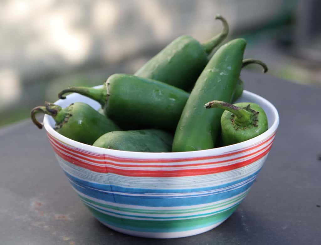Fresh Jalapeños